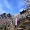 Photos: 梅百花園