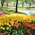 昭和記念公園(2021春)