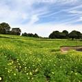 Photos: 花の丘