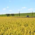 Photos: 収穫の時