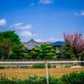 Photos: 東京でも、こんな春の風景
