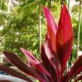 南国の紅葉?奇麗だ。
