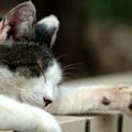 猫ちゃん ねんね中zzz