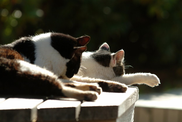 Photos: 2匹の猫ちゃん