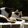 写真: 2匹の猫ちゃん