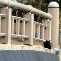 写真: 橋の上で