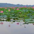 Photos: 水に映る DSCN9083