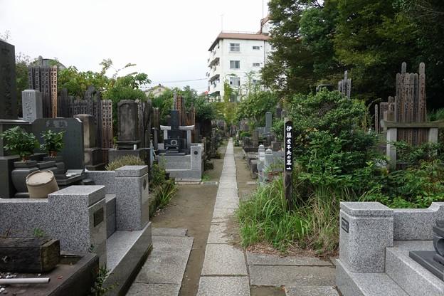 伊藤左千夫の墓:普門院@亀戸DSC02099