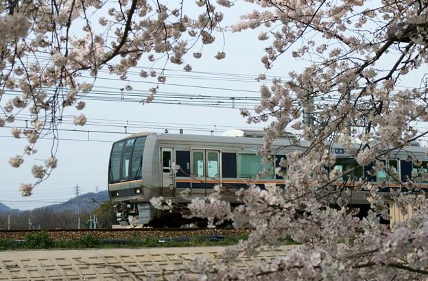 Photos: 沿線の桜
