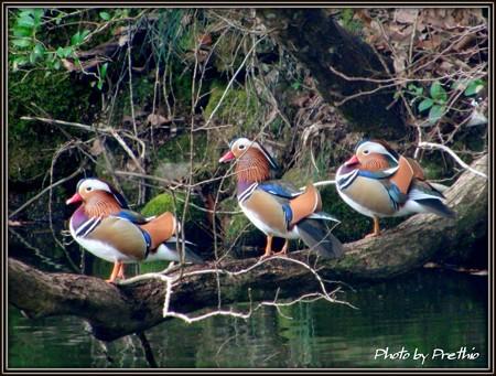 今年の初鳥^^(2)