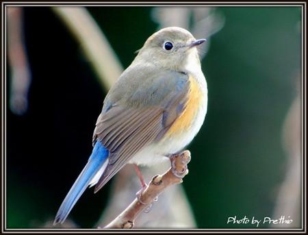 今年の初鳥^^(4)