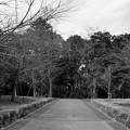 江古田の森公園へ