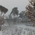 雪に沈むあじさい公園
