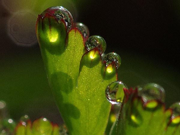 水滴とその影と