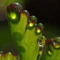 Photos: 水滴とその影と