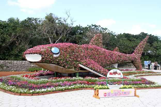 沖縄海洋博記念公園