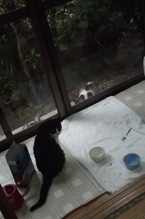 チェリー&三毛0724
