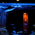 大人の水族館