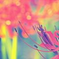 Fleur de Higan