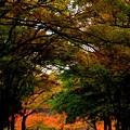 秋を歩く路