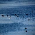 鳥のいる水面