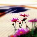 blooming way