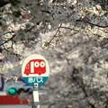 桜通りのバス停