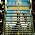 Photos: 階段の段階