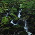 Photos: 苔生す渓流(鳥取県)