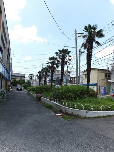 Photos: @hanayuu 北小金ハ...