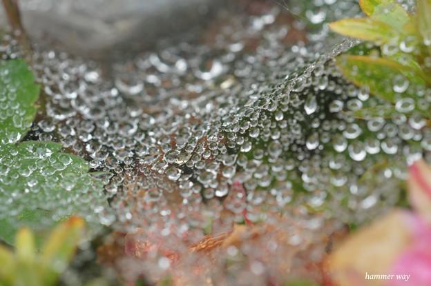 梅雨のシャンデリア