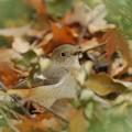 Photos: 落ち葉のベッド