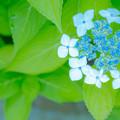 Photos: Green&Blue