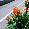 Photos: クンシラン 0423 059