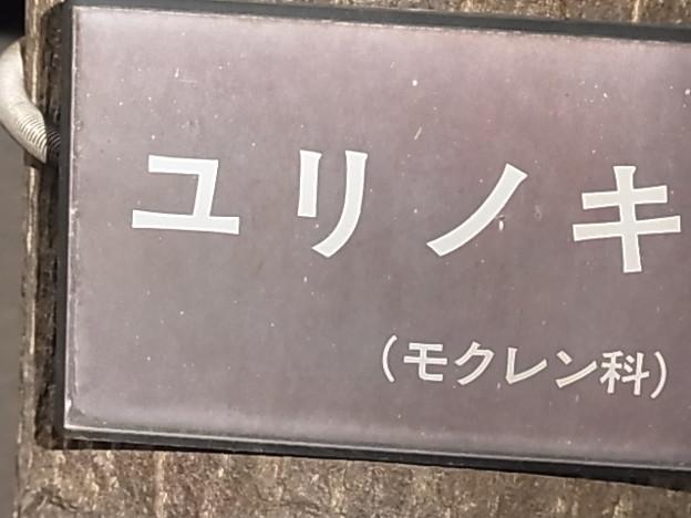 ユリノキ モクレン科 名札 0427 119