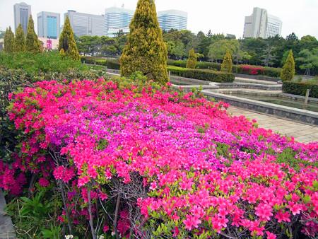 ツツジ 花壇 0430 091