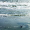 Photos: カラス 浜辺 0714 021