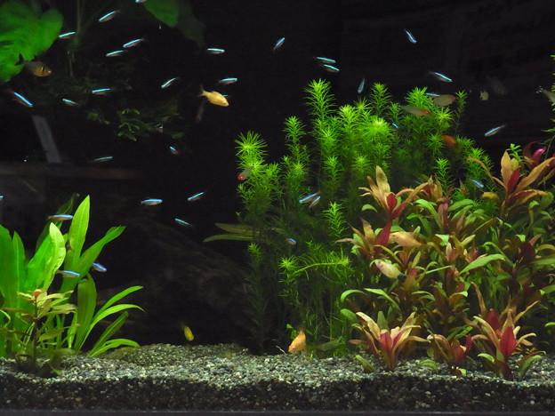 0806 熱帯魚 水槽 417