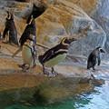 Photos: 0813 ペンギン 10