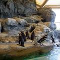 Photos: 0813 ペンギン 11