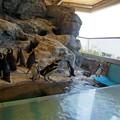 Photos: 0813 ペンギン 12