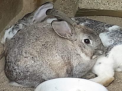 ウサギ 0602 504