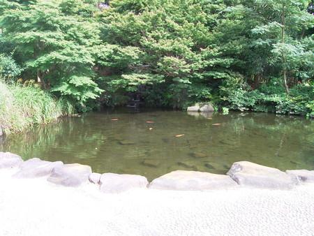 0827 コイ 池 ススキ イネ科 035