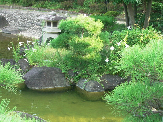 ユリ タカサゴユリ 庭園 岩 0818 080