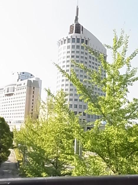 イチョウ イチョウ科 ホテル・ザ・マンハッタン 0629 003