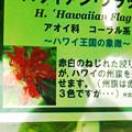 写真: 0912 アオイ科 ハワイアンフラッグ 名札 507