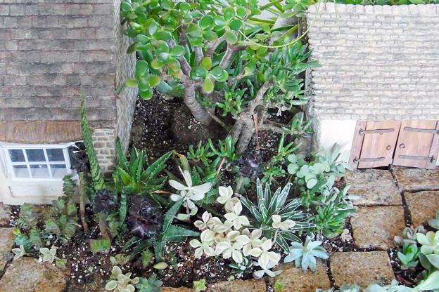 0912 多肉植物 アロエ カゲツ アエオニウム クロホウシ 540