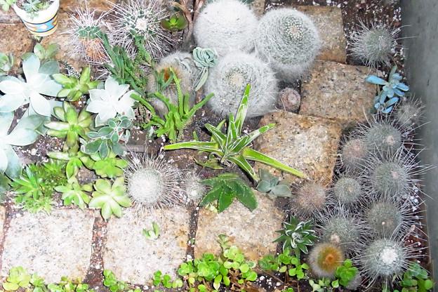 0912 多肉植物 サボテン 538