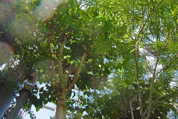 0912 熱帯植物 名前不詳 477