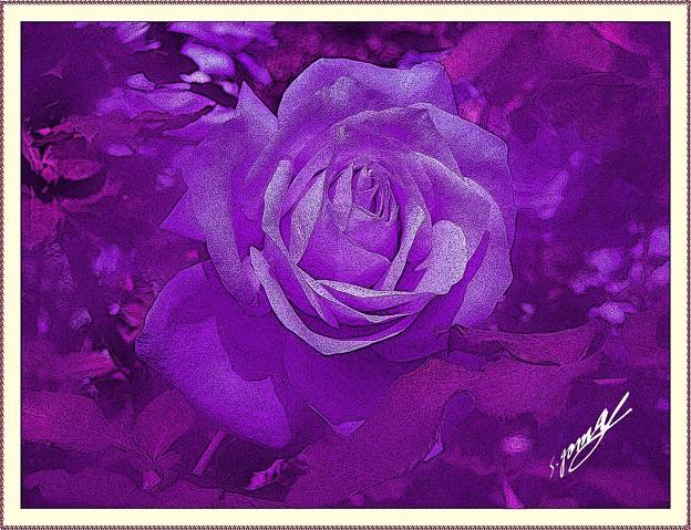 「額入り・・紫の・・薔薇・・画像・・」です・・・